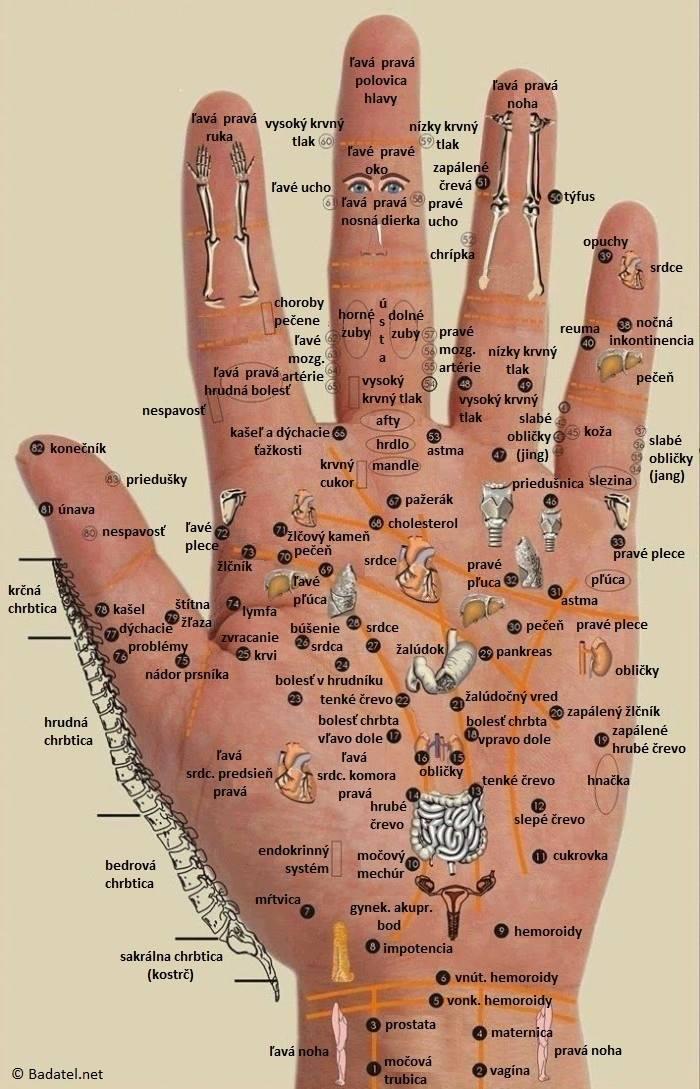 Akupunkturní zázračné body na ruce - zajímavost pro každý den.